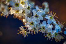 Florile - Poeziile pamantului
