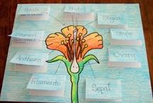 LAPBOOK-květiny
