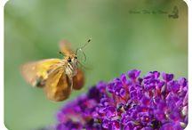 Butterfly Love ♥