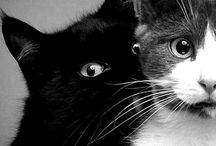 L'essere perfetto  / Cats!! Only cats