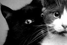 Feline LOVE / Kitties galore