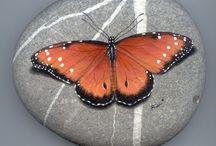Rock butterfly