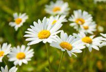 Pflanzen / Blumen  / Pflege / Vernichten