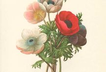 •Histoire naturelle • Natural History • / Affiches botaniques et zoologiques anciennes Vintage botanical and zoological print