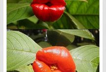 egzotik bitkiler