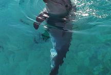 Dolphins / My love