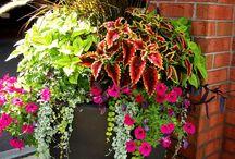 Pot fleur extérieur