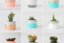 hipsterskie roślinki