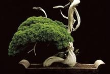 Fine bonsai-Singer/Valvanis