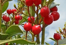Berries / #Berries / by My Lap Shop Publishers