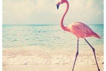 \ Flamingo /