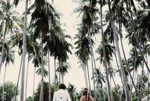 Tropicana Wedding Vibes