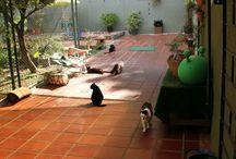 Rescue - Omhänderta katter