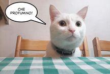 Il mondo di Percy / Percy è un gatto bianco. Il mondo di Percy ruota intorno al cibo. Qualche volta Percy dorme. Qualche volta Percy gioca. Ma più spesso Percy ha fame.