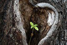 Природа с любовью