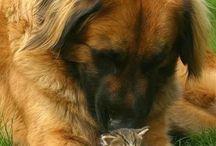 dogs pets cute