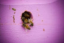 Beekeeping / A group board for all sites beekeeping. Anything that anybody likes they can stick on here.