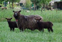 Woolmakers / zij die ons natuurlijke wol leveren en plantaardige vezels, past wel bij elkaar op 1 nord.
