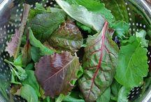 Salad Greens / by Maggie Morgan