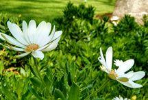 Flowers / Fotografías