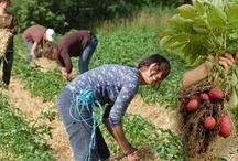 Grow Food Not Grass!