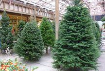 Christmas at PKN / Port Kells Nurseries' Christmas Wonderland