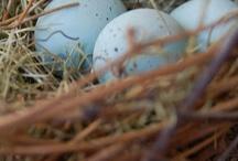 nest love...