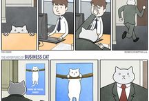 business -cat