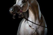 Ohhhh, horses....