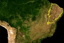 Caatinga - Flora / Caatinga (do tupi: ka'a [mata] + tinga [branca] = mata branca) bioma exclusivamente brasileiro. Este nome decorre da paisagem esbranquiçada apresentada pela vegetação durante o período seco: a maioria das plantas perde as folhas e os troncos tornam-se esbranquiçados e secos. A caatinga ocupa uma área de cerca de 850.000 km², cerca de 10% do território brasileiro (quase todo o Nordeste e parte do Sudeste.