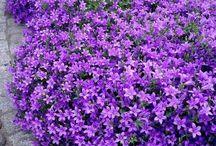 plantas flor