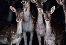 schönsten Tiere