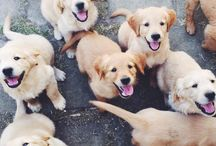 ♡DOGS ♡