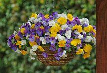 Kevään kukat
