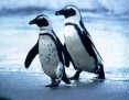 I Love - Penguins / by Jen Goode