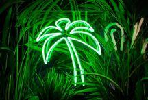 씨코르 palm tree