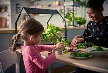 Градинарство вкъщи със системата хидропоника / Представяме ти градинарство вкъщи със системата хидропоника - лесна система за отглеждане на свежи подправки и зеленчуци, без необходимостта от почва или ествествена светлина. Избери между 18 различни семена - от босилек до маруля, и се наслаждавай как растат в дома ти. Всичко необходимо можеш да намериш тук http://www.ikea.bg/indoor-gardening/ и тук http://www.ikea.bg/home/ikea-collections/indoor-gardening/