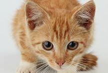 Plébiscite anti-lolcat / C'est une pratique courante depuis plusieurs années, promouvoir son image, sa marque ou ses produits grâce à des chatons ou autres animaux irrésistibles. Et oui, ça marche alors n'importe qui en profite pour récupérer le phénomène en sa faveur et au dépend des chats : les particuliers, les people, les entreprises, les associations et bientôt les politiques… LeBlog'in-the-Shadow en a eu marre et lance ce grand plébiscite pour laisser les chats, chiots et autres bestioles en paix !