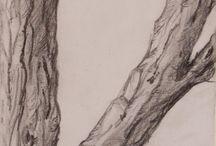 boom tekenen