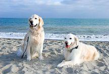 Dakota & Hunter - AAA petbook photo contest finalist.