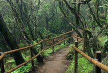 Nasjonalpark