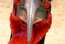 Birds of SA