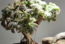 Piante come gioielli / Succulent plants in clay pots handmade