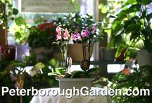 Orchid Plants / We carry a beautiful selection of assorted Orchid plants. Please drop by to see us at 443 George Street North, Peterborough, ON.