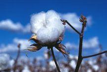 Cotton / by Georgia Farm Bureau