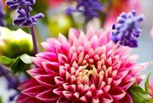 Flowers / by Pamela Walton Carlock