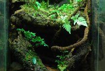 ideeën  voor terrarium