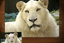 ANIMALS / WILD LIFE FINE ART - OILS & ACRYLICS ON CANVAS PAINTINGS / by CollectorWare