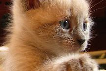 cats / chats / chats cats