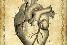 Anatomie 解剖/身体 Body